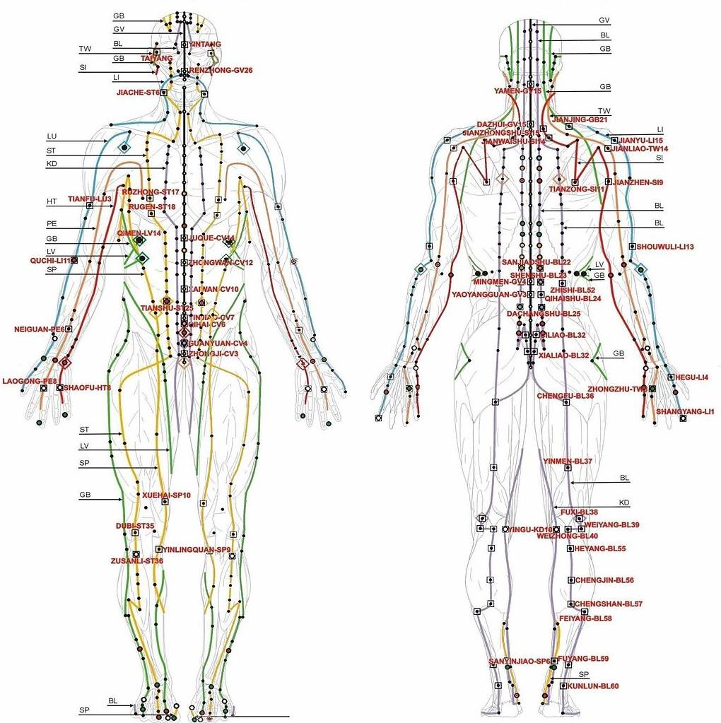 Acupuncture Merdians